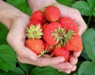 24 Ago -frutas-temporada