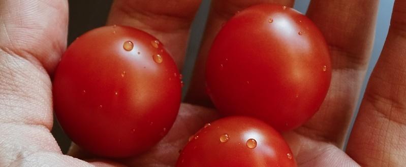 los tomates son beneficiosos por sus nutrientes para el cerebro