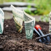 Billetes de dólar plantados en una porción de tierra