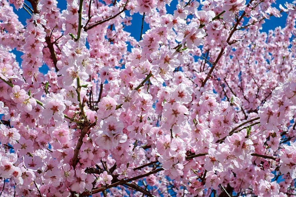 comienzo-primavera-las-alergias