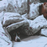 pros-contras-dormir-perro