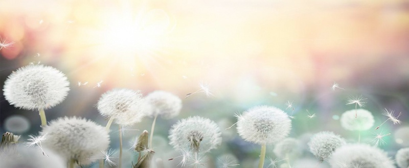 sintomas alergia primaveral polen
