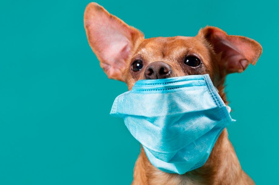 coronavirus animales