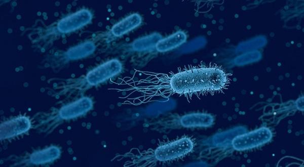 la adhesion de patogenos al epitelio de la vejiga produce cistitis