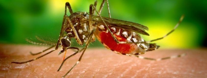 El virus del Nilo occidental infecta a insectos y aves