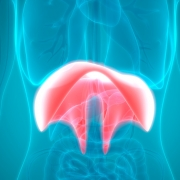 diafragma hipo