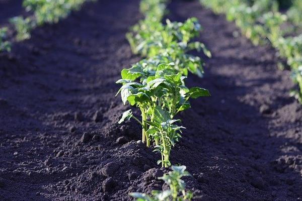 Qué sembrar en Septiembre depende también del clima de la zona